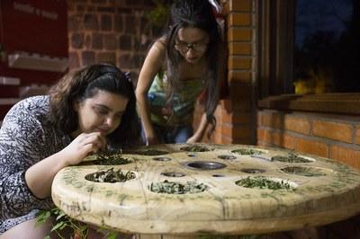As atividades do Herbário iniciaram em 2015 com a restauração das plantas coletadas pelo Evaldo Buturra
