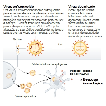 Vacina de vírus inativado - Figura adaptada de Callaway E. The race for coronavirus vaccines: a graphical guide. Nature 2020;580:576–7