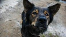 Casos de leishmaniose canina visceral aumentaram 30% nos últimos três anos em Foz do Iguaçu
